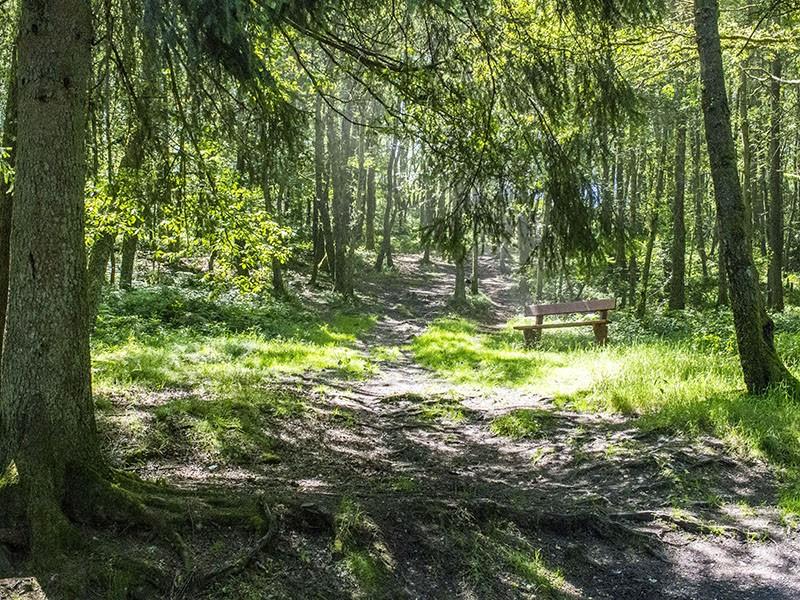 Ardennen Wald
