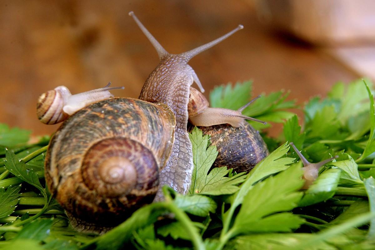 Warnant snail farm