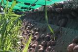 Bierwart snail farm