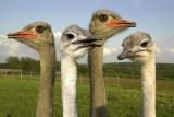 Ostrich farm Pont d'Amour