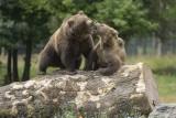 The Caves of Han - Animal park - Bear Hill
