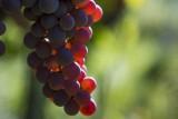 Raisins - Vin de Liège