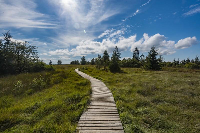 Parc Naturel Hautes Fagnes-Eifel
